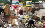 प्लास्टिक कचरे से गहराता संकट